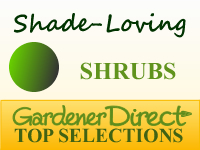 Shrubs - Shade Loving