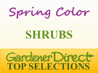 Shrubs for Spring Color