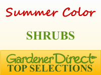 Shrubs for Summer Color