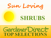 Shrubs - Sun Loving