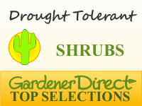 Shrubs for Xeriscapes & Drought Tolerance