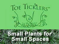 Toe Ticklers Groundcover Series