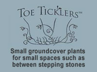 Toe Ticklers / Stepable Plants