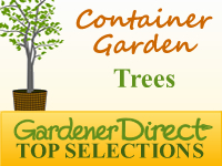 Trees for Container Gardens
