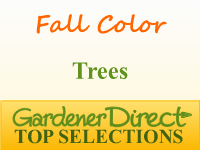 Trees for Fall Color