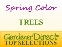 Trees for Spring Color
