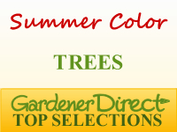 Trees for Summer Color