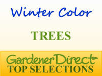 Trees for Winter Color