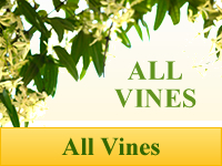 Vines - All