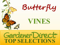 Vines - Butterfly Attracting