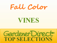 Vines for Fall Color