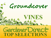 Vines - Groundcovers
