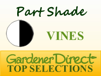 Vines for Part Shade